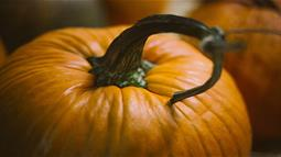 A photograph of a pumpkin